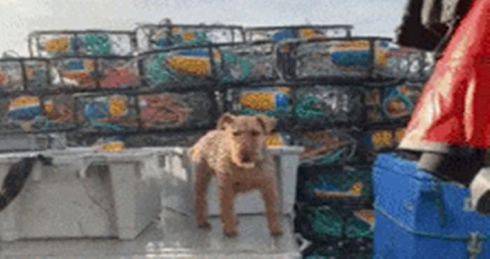 Ovaj pas ribolovac je sve što vam treba kao dnevna doza pozitive