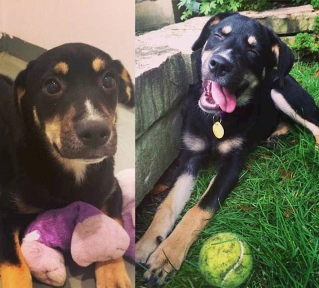 """""""Moj pas udomio je kujicu Pheobe. Lijevo je ona na dan udomljenja, a desno danas."""""""