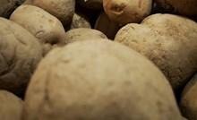 U gomili krumpira našao se jedan koji izgleda kao da ima plan za uništenje svijeta