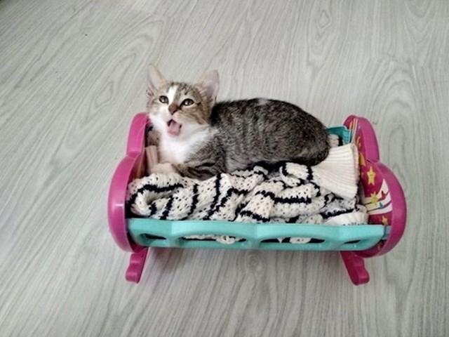 """""""Od - životinje nisu za kuću, do - vidi napravio sam joj krevetić jer ona je mala beba."""""""