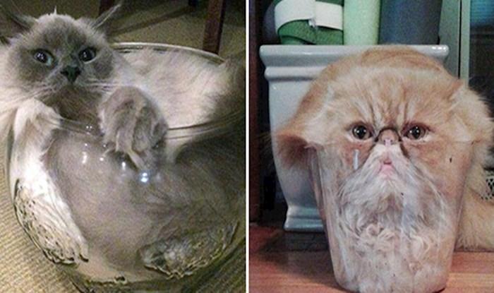 Nikome nije jasno kako i zašto su se ove mačke ugurale u posude