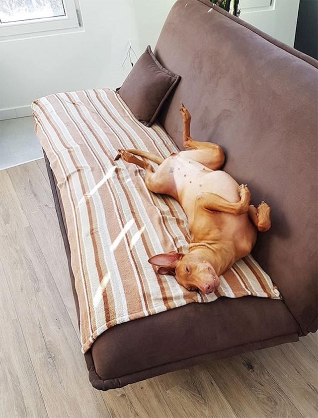 14. Što napravite kada uhvatite svojeg kolegu koji spava na poslu? :D