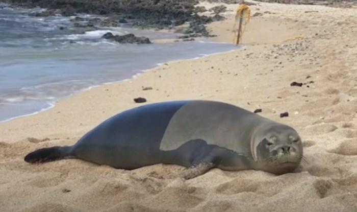 Hit video; morate vidjeti tuljana koji je ležerno pustio vjetar nakon što je pogledao kamermana
