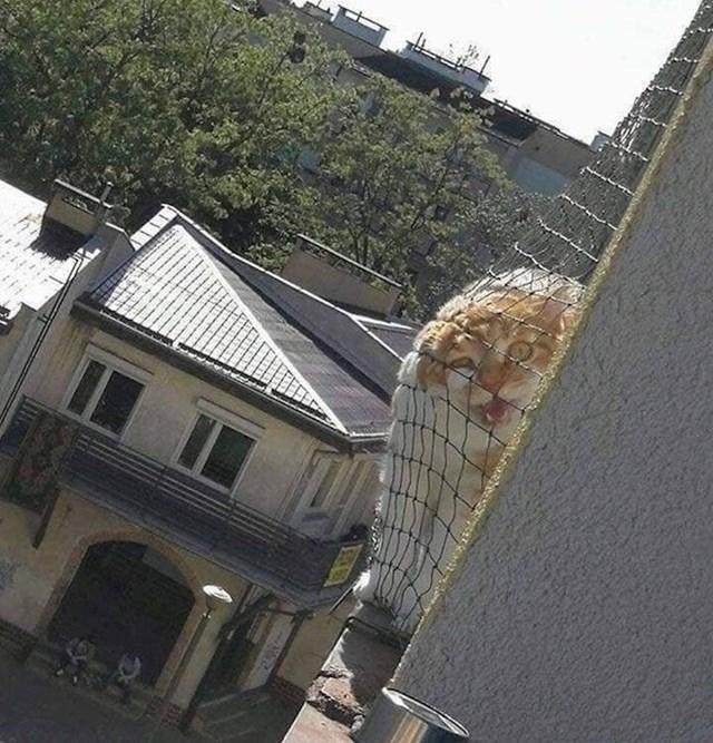 """6. """"Susjedova mačka može nas pronaći bilo kad i bilo gdje."""""""