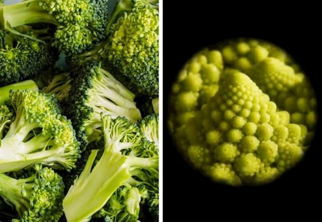 12. Brokula