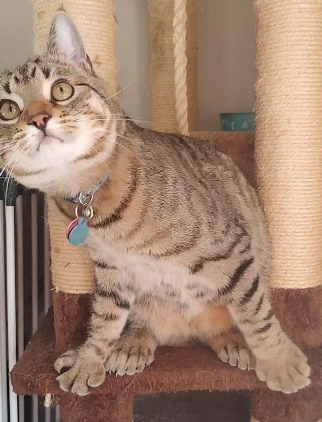 11. Maca s malo previše prstića na šapama