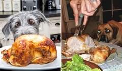 20 pasa koji su totalno hipnotizirani hranom; oduševit će vas njihovi smiješni pogledi