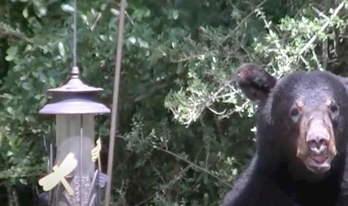 VIDEO U dvorištu ovih ljudi udomaćila se obitelj crnih medvjeda