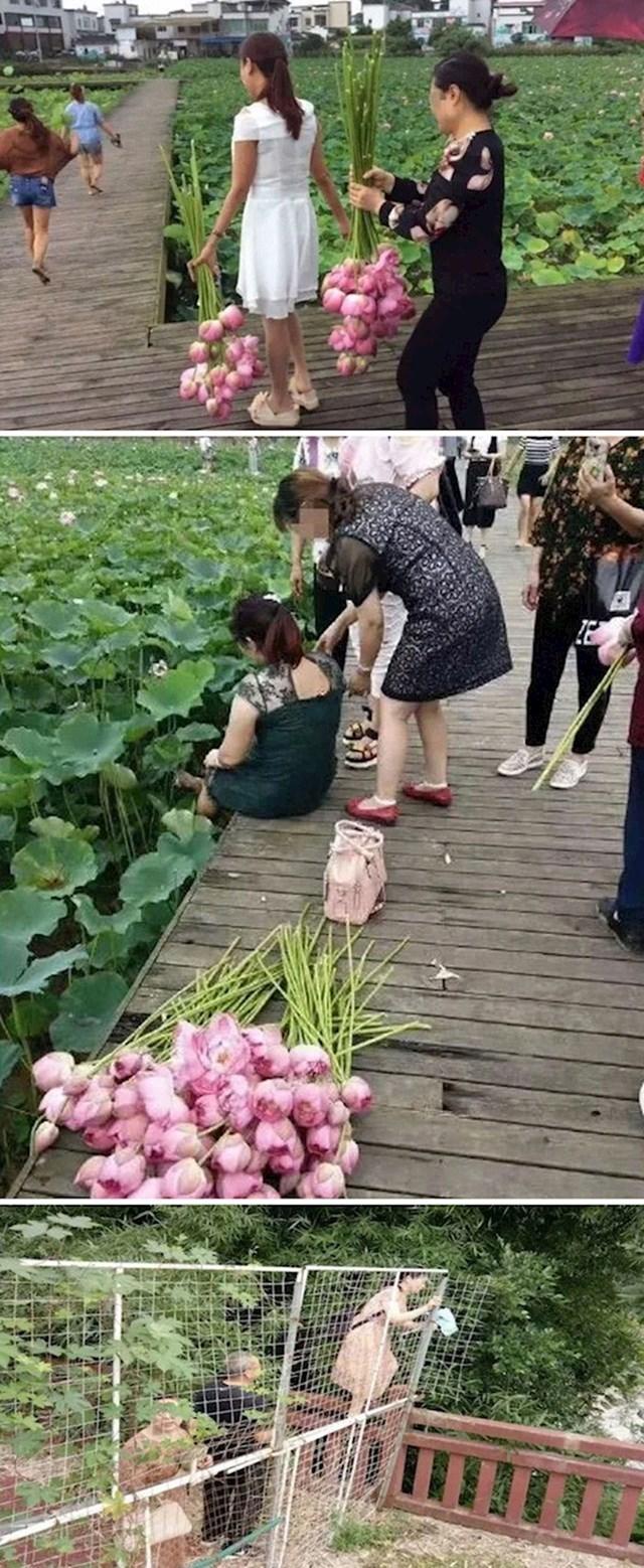 #5 Turisti su pokrali sve cvjetove lotosa u ekoparku