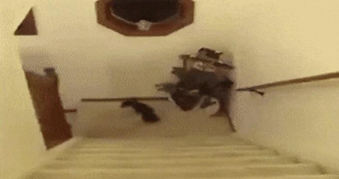 Morate vidjeti neobičnu metodu penjanja uz stepenice koju prakticira ovaj psić