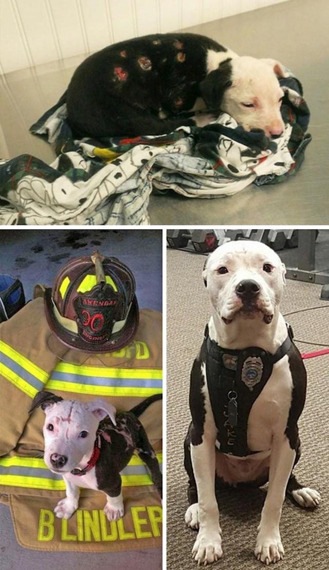 Pas ranjen u požaru postao je vatrogasac.