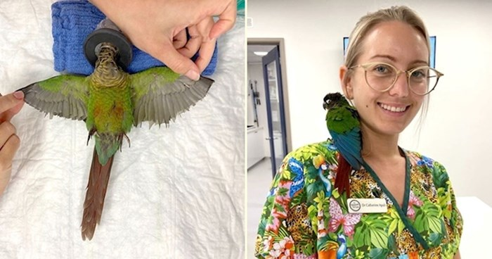 Preslatka papiga dobila je nova krila nakon što ih je netko podrezao kako ne bi mogla letjeti