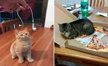 22 fotke zločestih mačaka koje su pokvarile dan svojim vlasnicima