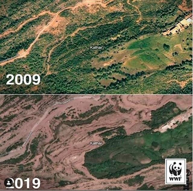 3. Šume diljem svijeta kao i njihovi stanovnici naprosto nestaju.
