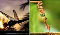 Mladi Indijac pametnim telefonom snima genijalne makro fotke insekata
