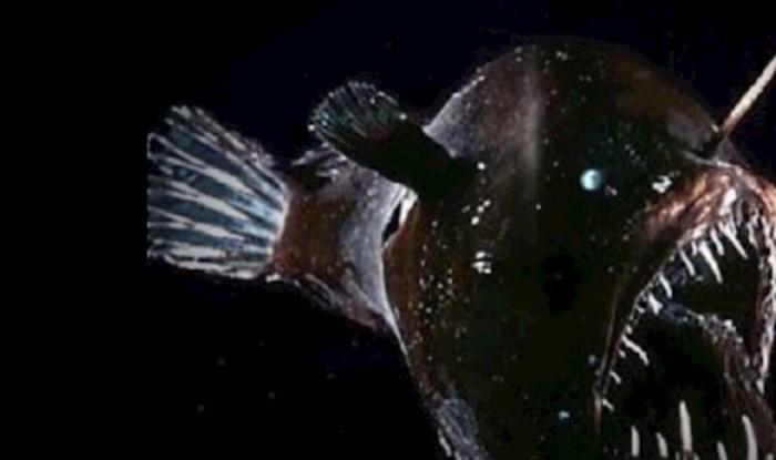 VIDEO 15 zastrašujućih bića iz dubina oceana koja stvarno postoje
