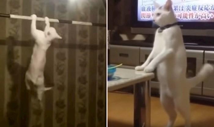 VIDEO Urnebesne mačke koje se obožavaju ponašati kao ljudi