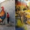 3D grafiti uličnog umjetnika iz Portugala oduševili su internet; ovo je stvarno wow!