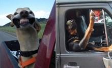 20+ smiješnih fotki pasa koji su rođeni za život na kotačima