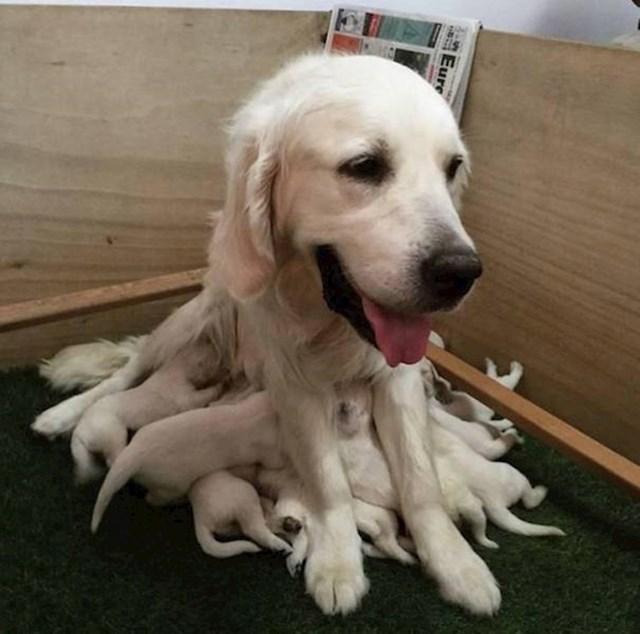 7. Novopečena mama koja izgleda više kao hobotnica nego kao pas.