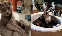 20 mačaka koje imaju poseban odnos s umivaonicima