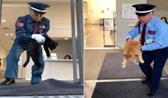 Nesvakidašnja priča o upornosti: Dvije mačke iz Japana godinama pokušavaju ući u muzej