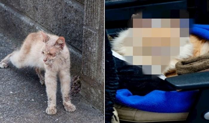 Dirnut će vas transformacija ovog bolesnog uličnog mačka