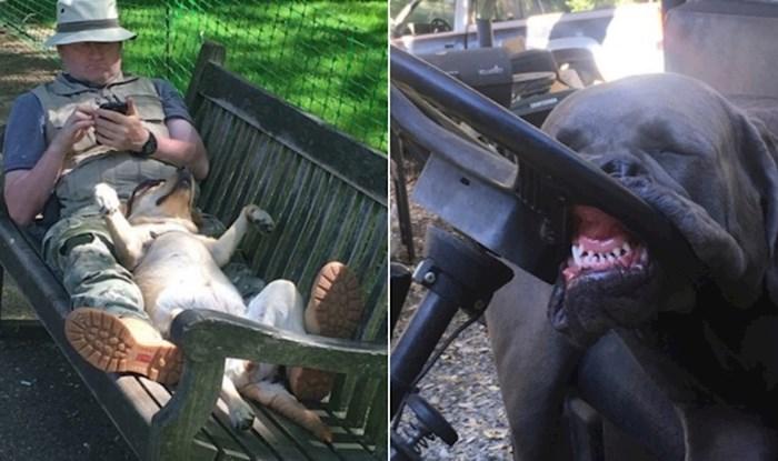 20+ blesavih pasa koji su zaspali u čudnim pozama i postali hit na internetu