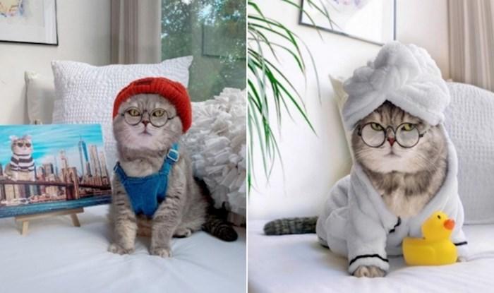 Napušteni ulični mačak Benson pronašao je novi dom i postao zvijezda na Instagramu