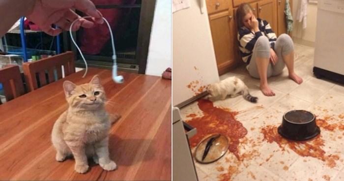 20 smiješnih fotki na kojima se vidi da život s mačkom može biti prava noćna mora