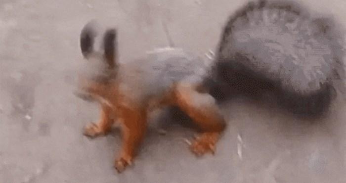 Oborit će vas s nogu način na koji ova vjeverica pokazuje da je sretna