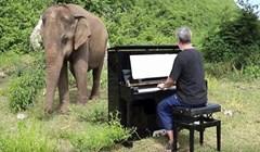 VIDEO Slijepa slonica zaplesala uz umirujuće zvukove klavira