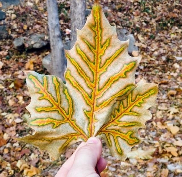 List koji izgleda kao da je oslikan.