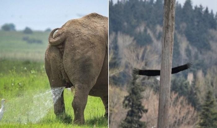 22 fotke divljih životinja koje su toliko loše da su genijalne
