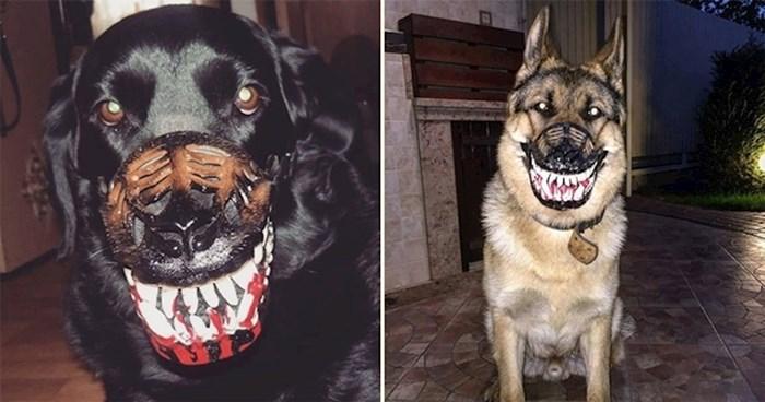 Zastrašujuće brnjice koje će i najsimpatičnijeg psa pretvoriti u čudovište