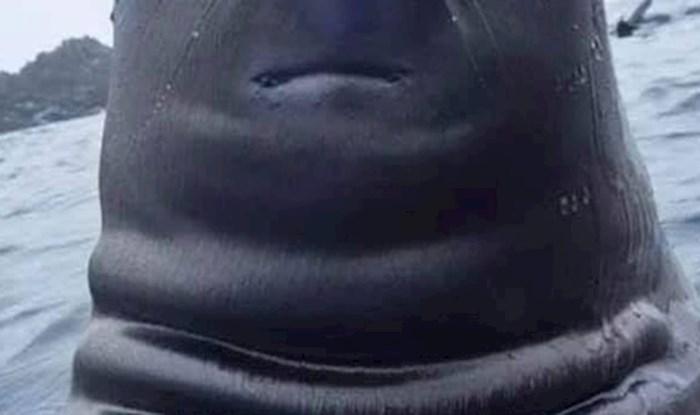 Tuljan je ispao toliko užasno da bi da može sigurno zabranio ovu fotku