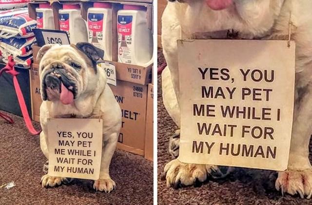 1. Pas koji čeka vlasnika ispred dućana. I čeka da ga netko usput pomazi.😄