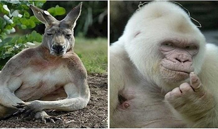 Da životinje mogu imati Tinder ovo bi im sigurno bile profilne fotke