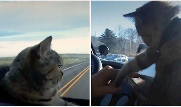 VIDEO Netipična mačka koja voli avanture i vožnju na prednjem sjedalu