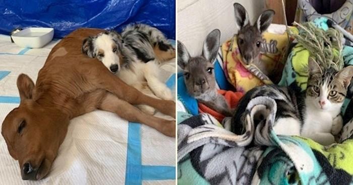 23 fotografije životinjskih prijatelja koje će vas dirnuti do suza