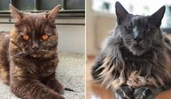 20 vrlo neobičnih mačaka koje izgledaju kao da su fotošopirane