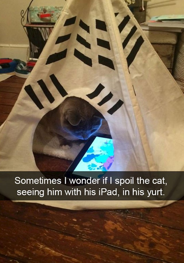 3. Ponekad dok gledam svoju mačku s iPadom u šatoru pitam se - jesam li ju previše razmazio?
