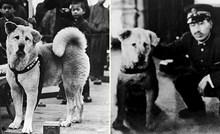 Ovako je izgledao pravi Hachikō, najodaniji pas u povijesti