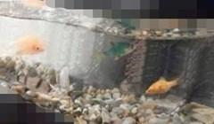 Ovo je bez imalo sumnje najčudniji akvarij koji ste do sad vidjeli