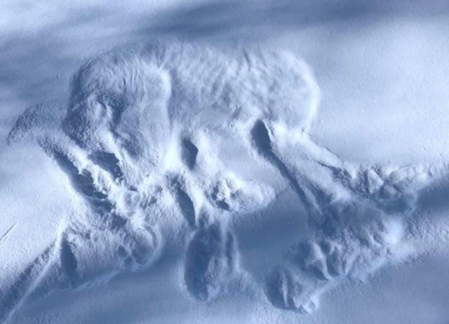 8. Pronašla je otisak vuka u snijegu. Vide se čak i rebra!