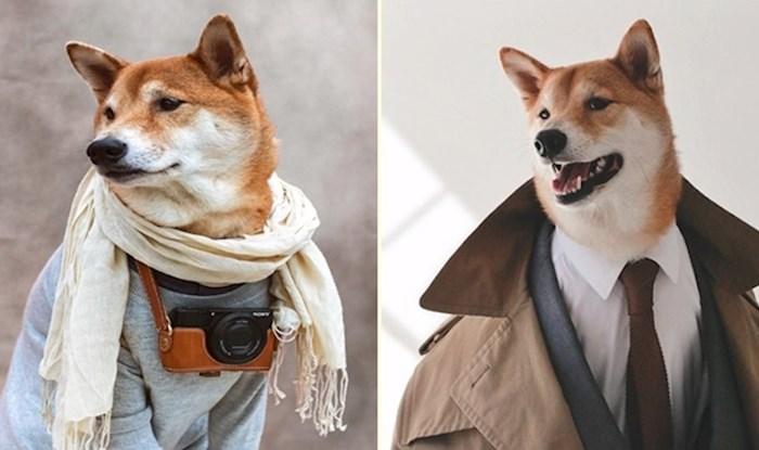 Modno osvješteni pas toliko dobro nosi mušku odjeću da slobodno može zamijeniti ljudske modele