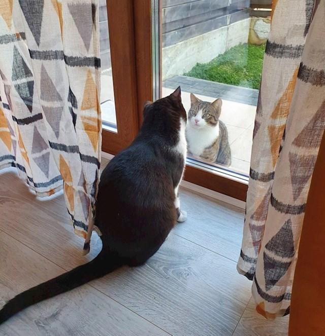 """10. """"Susjedova mačka koja dolazi svaki dan u isto vrijeme vidjeti što ima s nama""""."""