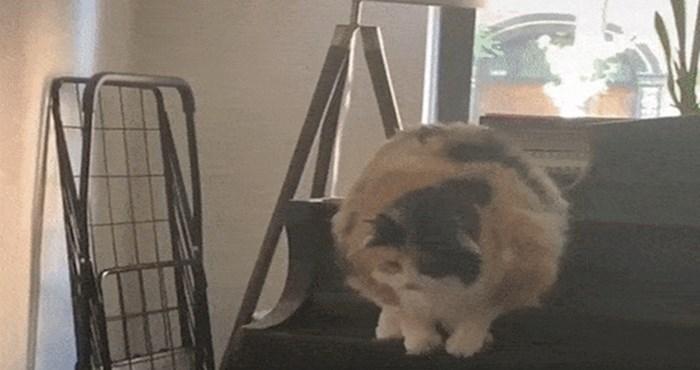 Nestašna mačka vlasniku je napravila nešto presmiješno