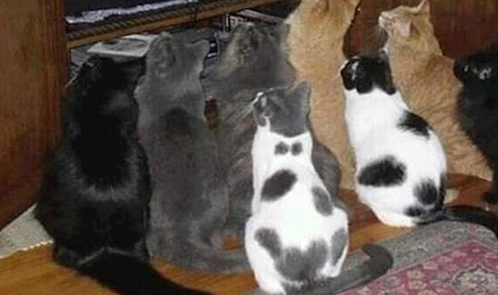Ova skupina mačaka nije se okupila zbog hrane, razlog je nevjerojatan
