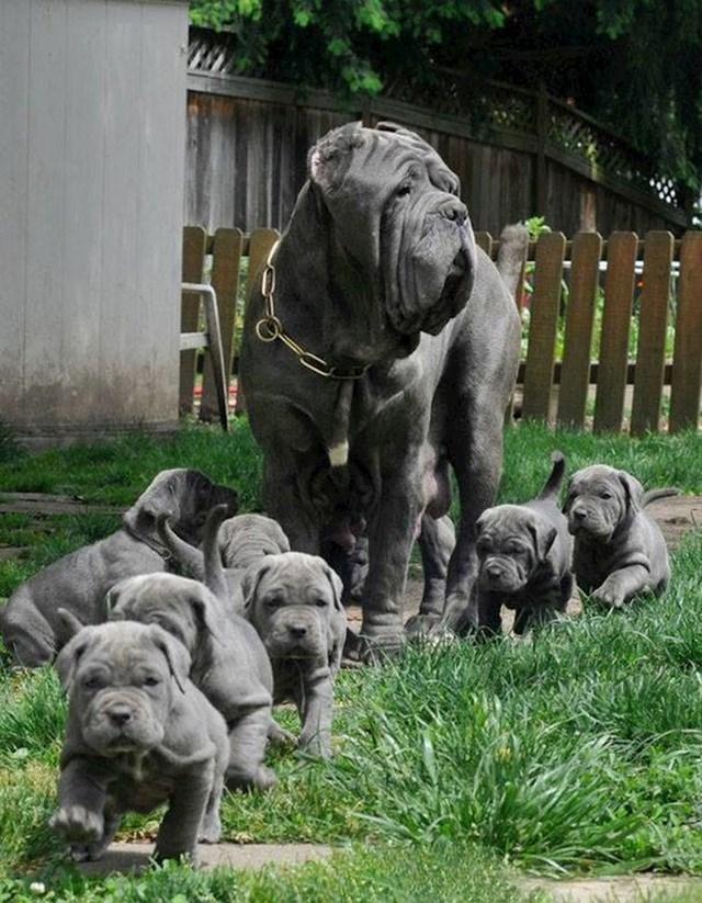 """""""Ponosna sam na svoju kujicu koja je pravi nježni div oko svojih štenaca."""""""